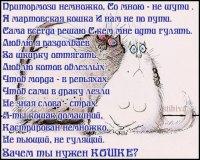 Стихи к подарку кошек 379